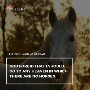 Horse Lover Quote