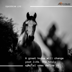 Horse Quote Motivation