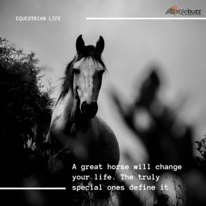 Horse Quote Motivation