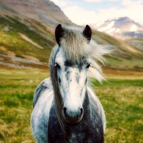 stablebuzz equestrian directories