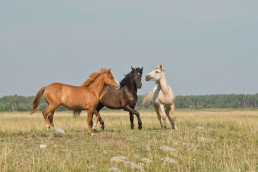 Picture of horses taken by Annika Treial displayed on a blog for Stablebuzz Stable Management solutions