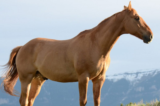 Picture of horse displayed on Stablebuzz Stable Management website borrowed from Unsplash