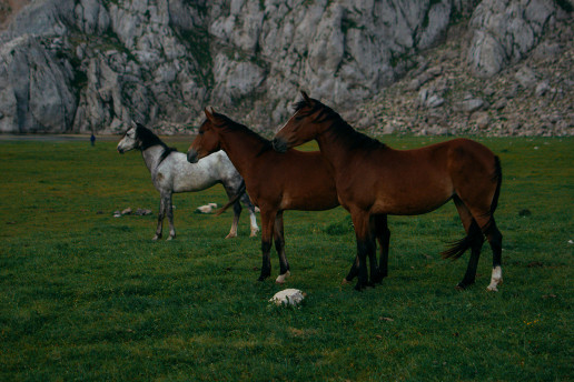 Picture of three horses
