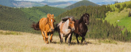 Picture of three horses on a hilly terrain