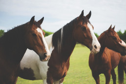 Zoomed in picture of three horses
