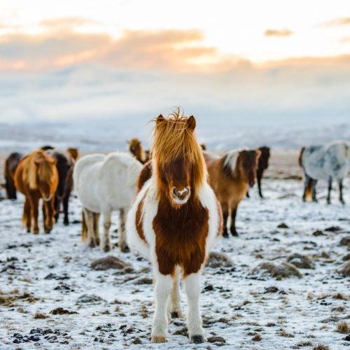 stablebuzz horseback riding in winter