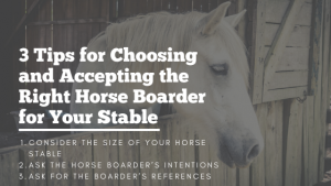 Horse Boarder