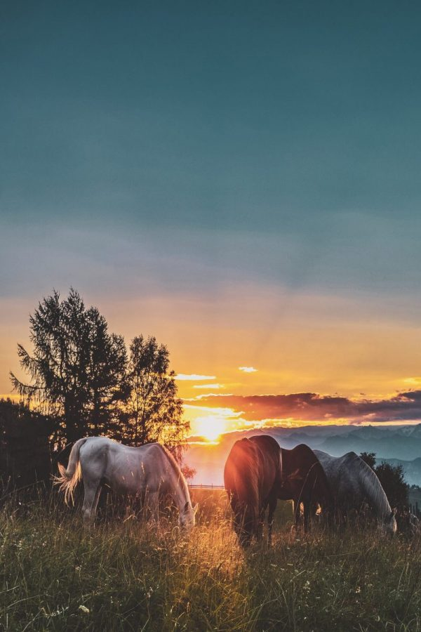 group of horses against sunset