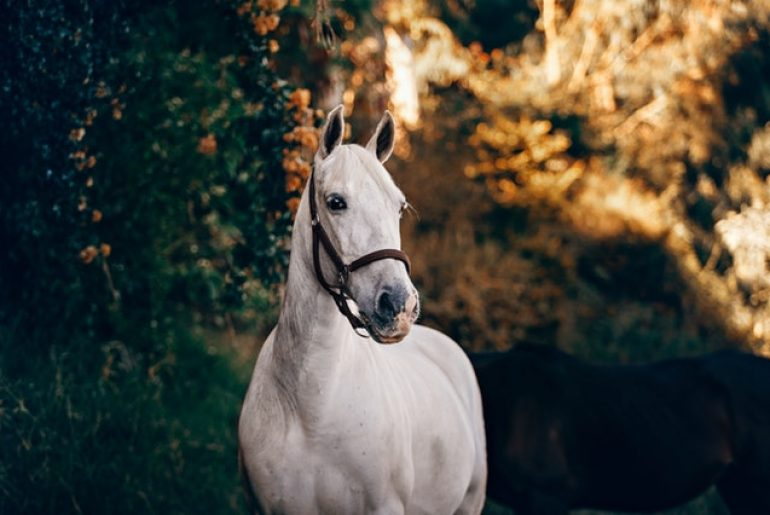 white-horse-near-green-leaves-1996330.jpg