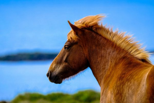 horse with blue background