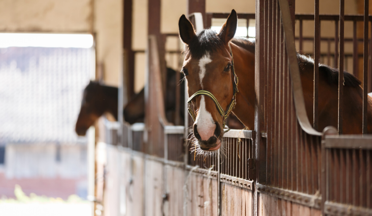 frugal horse stable management