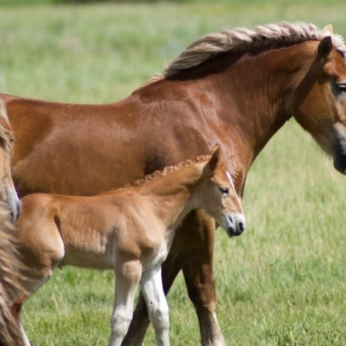 Everything You Need to Know About Equine Rabies